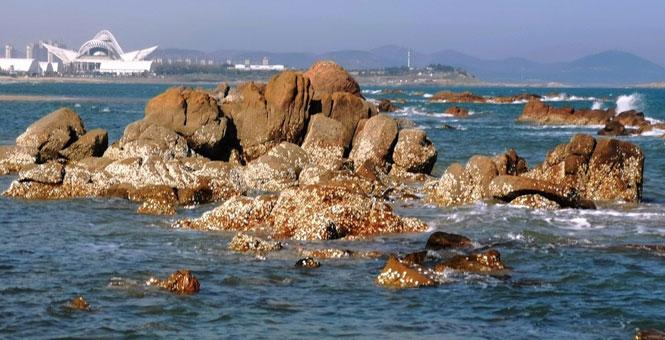 青岛海滨现海蛎子礁石群 成独特景观