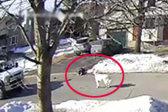 加拿大女子突然昏倒抽搐 宠物狗拦下过路车辆求救