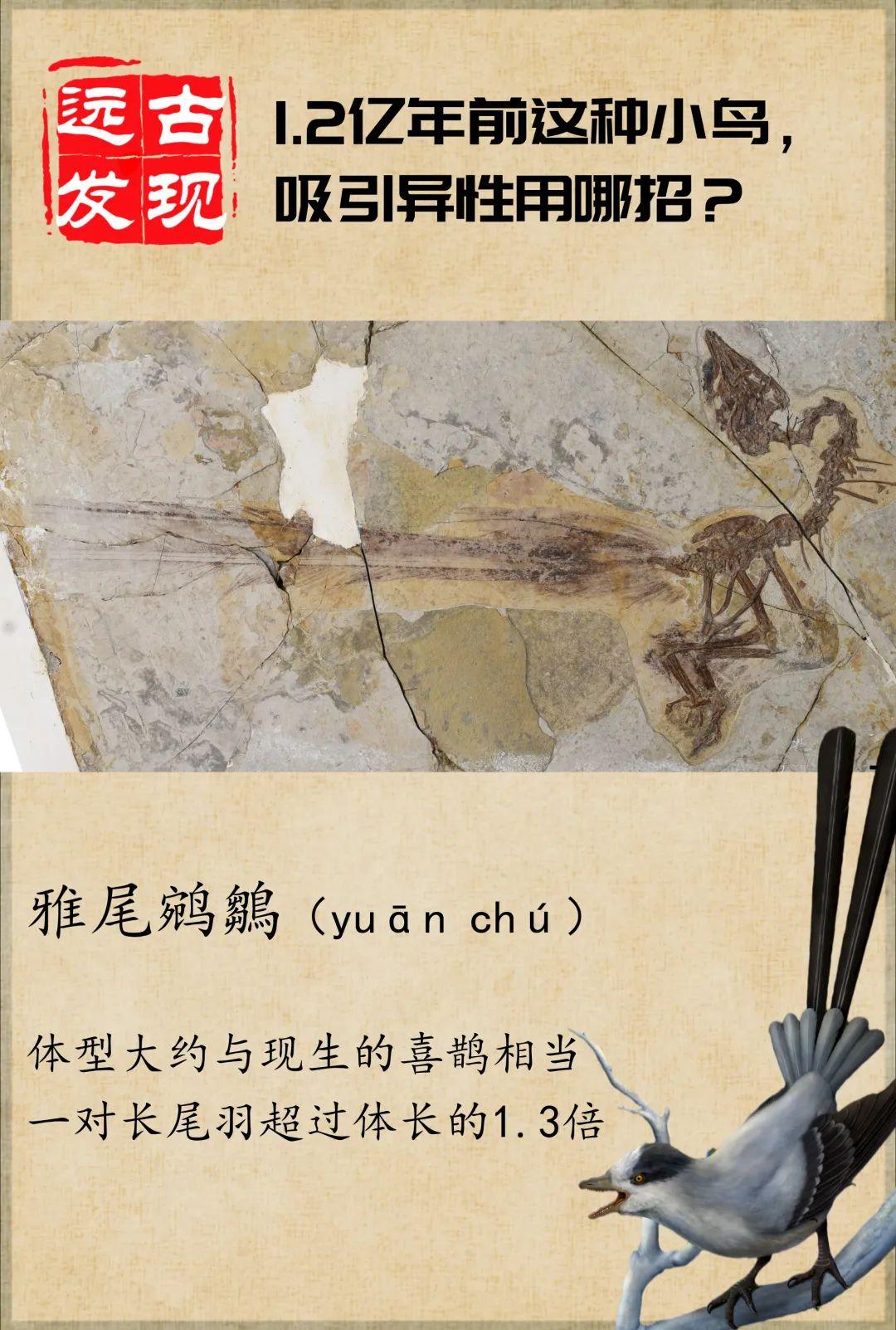 《吸引异性的招数,1.2亿年前就被它用过了》