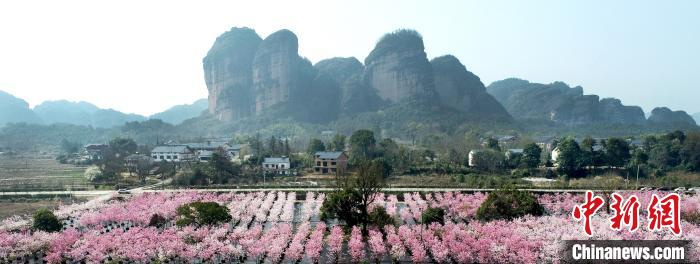 龙虎山樱花、郁金香争相绽放 花团锦簇春意盎然