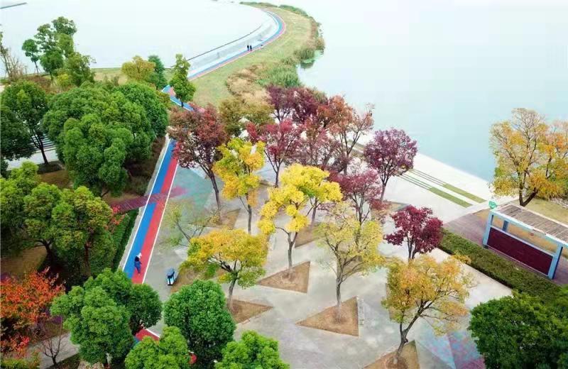 先行项目初见成效,《上海慢行交通规划设计导则》下月发布