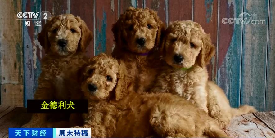 电银付pos机(dianyinzhifu.com):多国宠物市场发作!这个品种的狗狗,需求暴增900%!你知道吗?在美国给宠物看病有多贵... 第2张