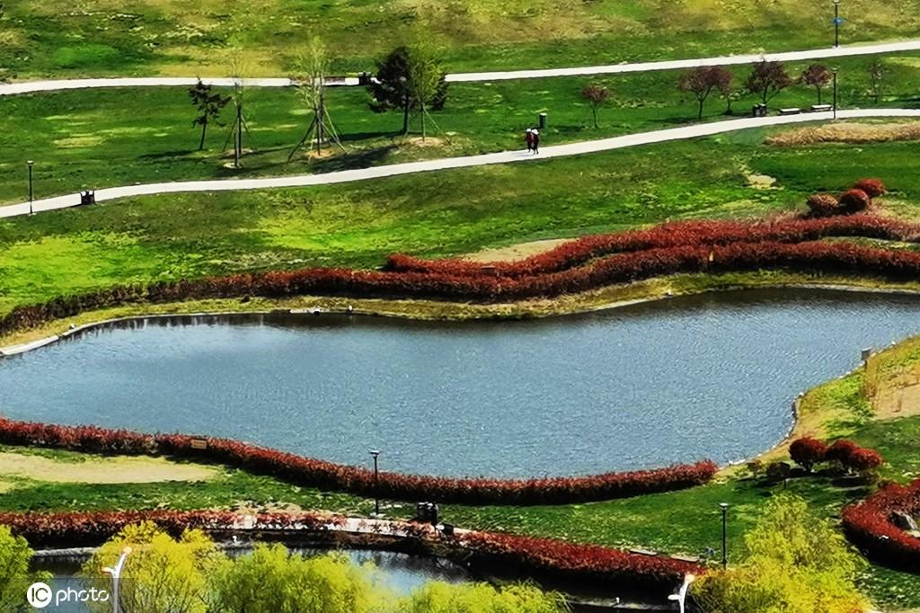 """山东青岛:公园景观水系""""红带""""缠绕 春意盎然"""
