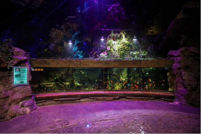 北京海洋馆生态缸暑期盛大揭幕:共建蓝色循环 拥抱生态未来