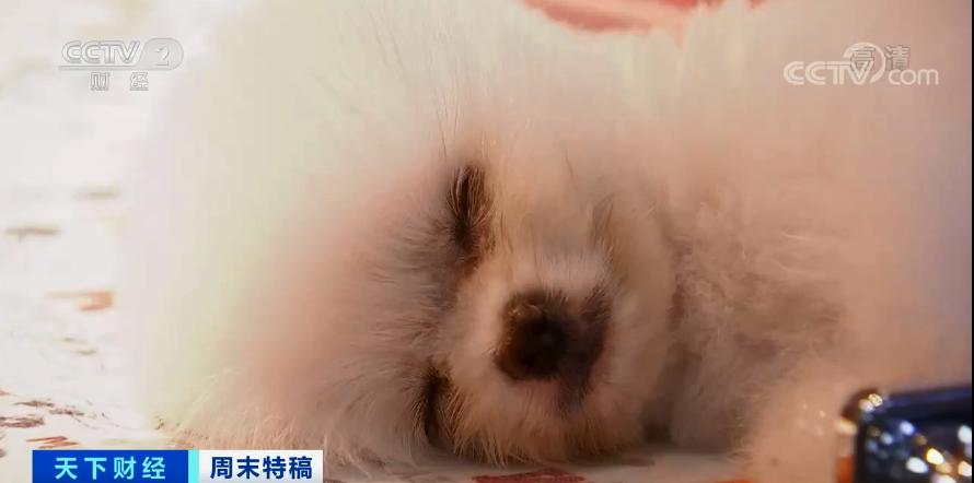 电银付pos机(dianyinzhifu.com):多国宠物市场发作!这个品种的狗狗,需求暴增900%!你知道吗?在美国给宠物看病有多贵... 第7张
