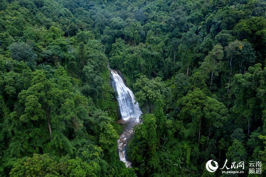 """探寻滇西热带季雨林 让万物自由生长"""""""