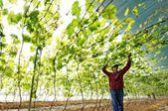 河北昌黎:发展设施果品种植 助力乡村振兴