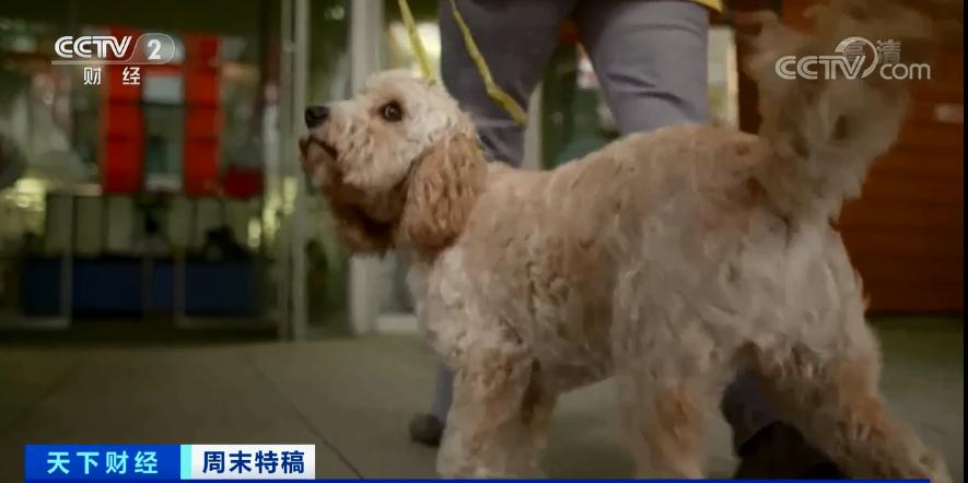 电银付pos机(dianyinzhifu.com):多国宠物市场发作!这个品种的狗狗,需求暴增900%!你知道吗?在美国给宠物看病有多贵... 第13张