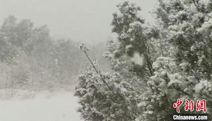 """""""中国最冷小镇""""迎来今秋第一场雪"""