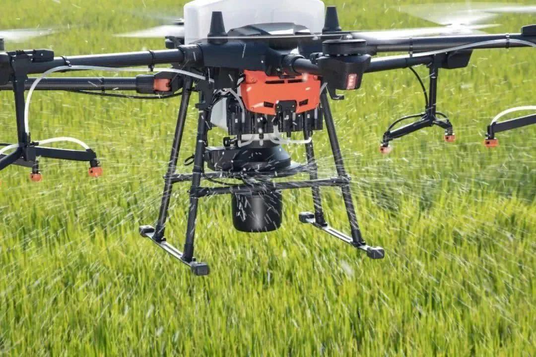 种水稻无需弯腰插秧,用无人机飞播就行了?专家:对,还