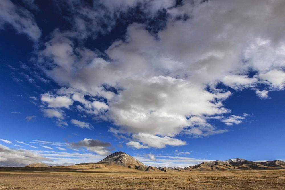 可可西里藏羚羊数量增至7万多只-第3张图片-凉面论坛_不只是免费发布招聘求职信息_致力成为生意人优选的分类信息网