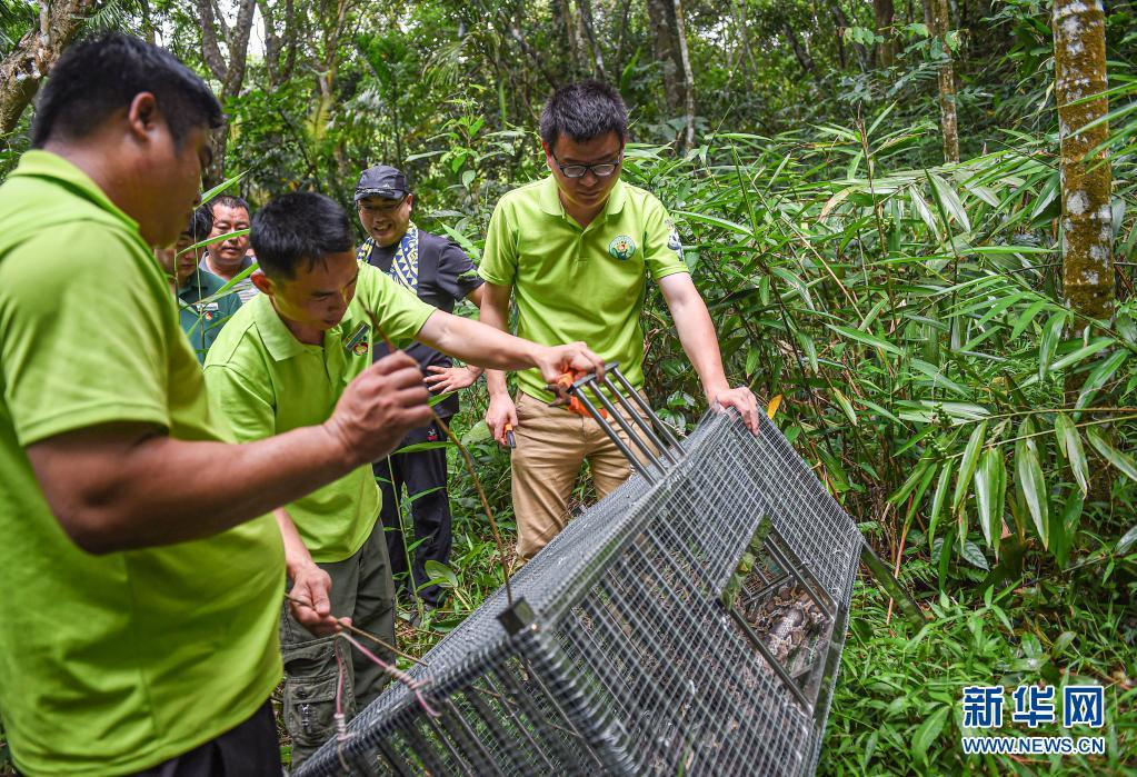 海南:放归国家重点保护野生动物