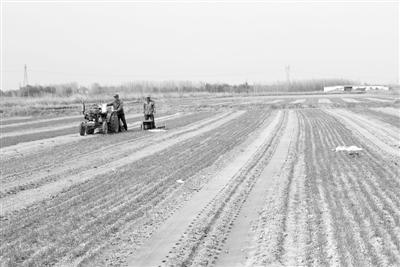 永州法制天然优势叠加科技支撑 内蒙古河套农业走向更高端