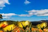 这沙漠长有三千多种植物