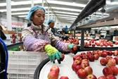 贵州威宁:产业扶贫结硕果
