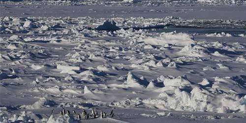 """""""雪龙兄弟""""在企鹅群注视下穿越南极圈"""