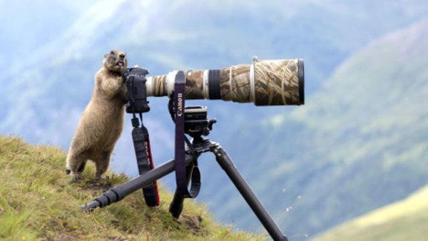 """动物界""""摄影大师""""长枪短炮玩的溜"""