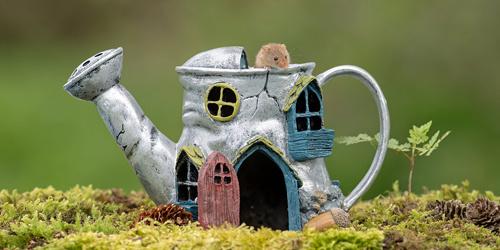 """""""鼠生""""赢家!英国摄影师为老鼠建立好休养所供其玩耍"""