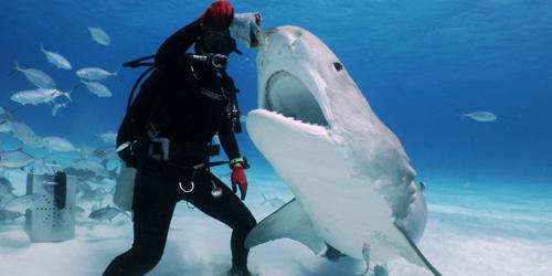 玩的都是心跳!美女潜水者与凶猛鲨鱼零距离亲密接触