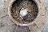 四川一明代古墓出土500年前鸡蛋 外壳依然完好