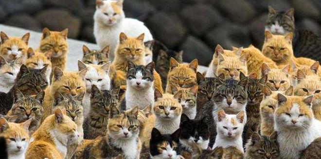 被猫咪霸占的岛屿,为了生存被迫下海捕鱼!