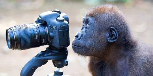 """晒晒动物界""""摄影大师"""" 长枪短炮玩的各种溜"""