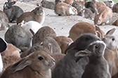 現實版萌寵樂園:兔子島