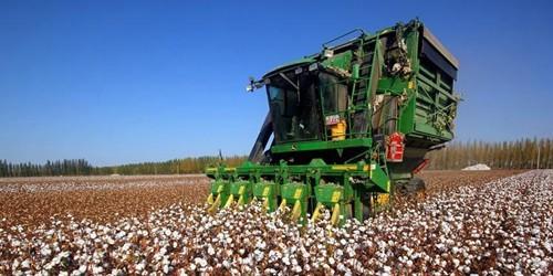 新疆南北疆棉花采收进入高峰期