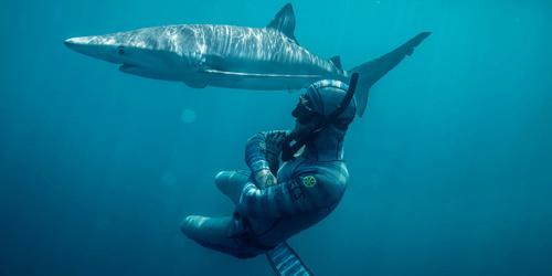 """世界图片一周摘取 鲨鱼专家和""""海中霸王""""零距离接触"""