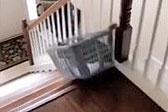美国一只宠物猫偷懒 坐洗衣篮滑下楼梯