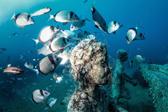 探訪海底王國!這是一座不容錯過的水下博物館