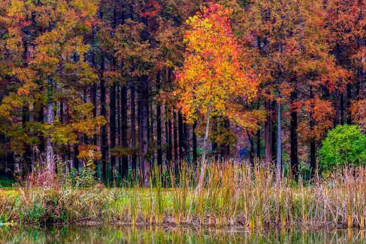 初冬黄海森林 美若童话世界