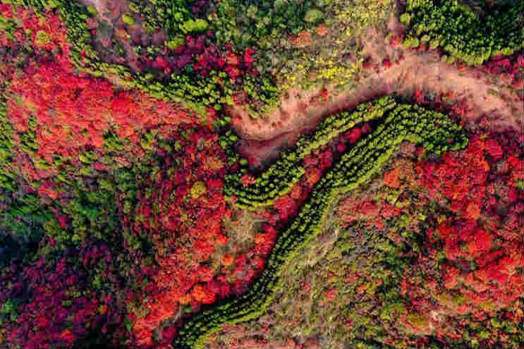 济南红叶谷:层林尽染,秋色绚烂