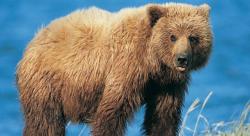 世界上最励志的熊