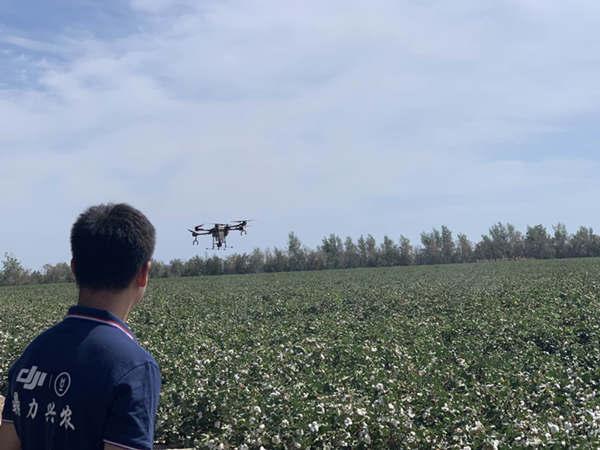 亩产值提高10% 无人机打药造福新疆棉农