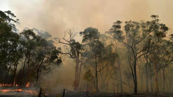 烟霾蔽日 澳大利亚山火持续肆虐