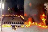 印度牧师将身体埋在土里周围点火对抗病毒