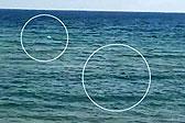 西班牙残疾游泳运动员海中训练遇鲨鱼 奋力逃离