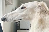 美国一狗狗鼻子长30厘米 或是世界之最