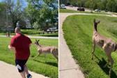 美国两男子跑步时遇小鹿一起加入慢跑行列