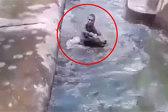 迷惑!波兰一醉酒男子结束隔离后去动物园揍熊