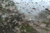 蝗虫群惊现巴拉圭阿根廷边境 大量庄稼被毁