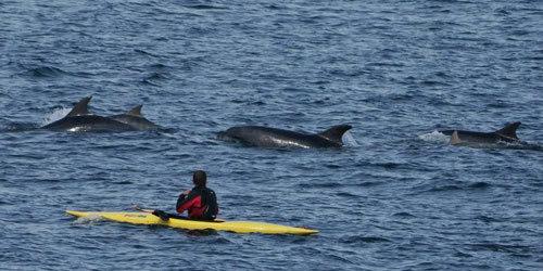 英男子乘坐皮划艇划船偶遇海豚组团游泳