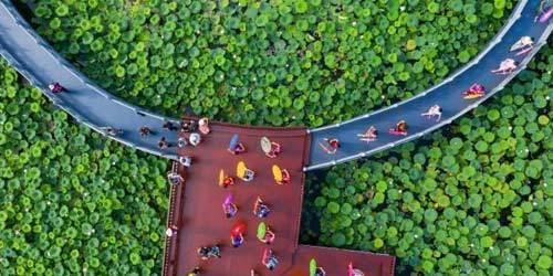 广西梧州荷花公园免费开放 市民演绎旗袍秀