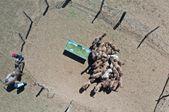 内蒙古:发展骆驼产业 助力乡村振兴