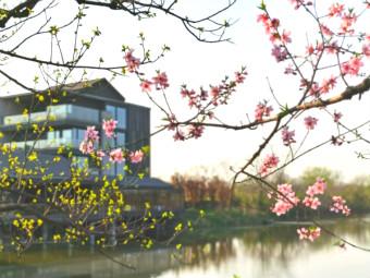 出游   西溪湿地的春天