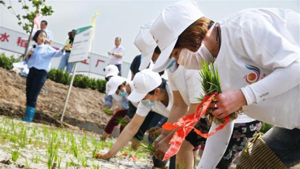 多地同插秧!今年海水稻将扩至10万亩