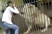 巴基斯坦一动物管理员喂食狮子时被抓住手臂撕咬