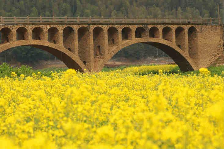 江西泰和:石拱桥与油菜花相映成趣