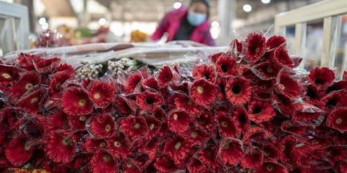 中美洲最大鲜切花交易市场逐步恢复健康营业